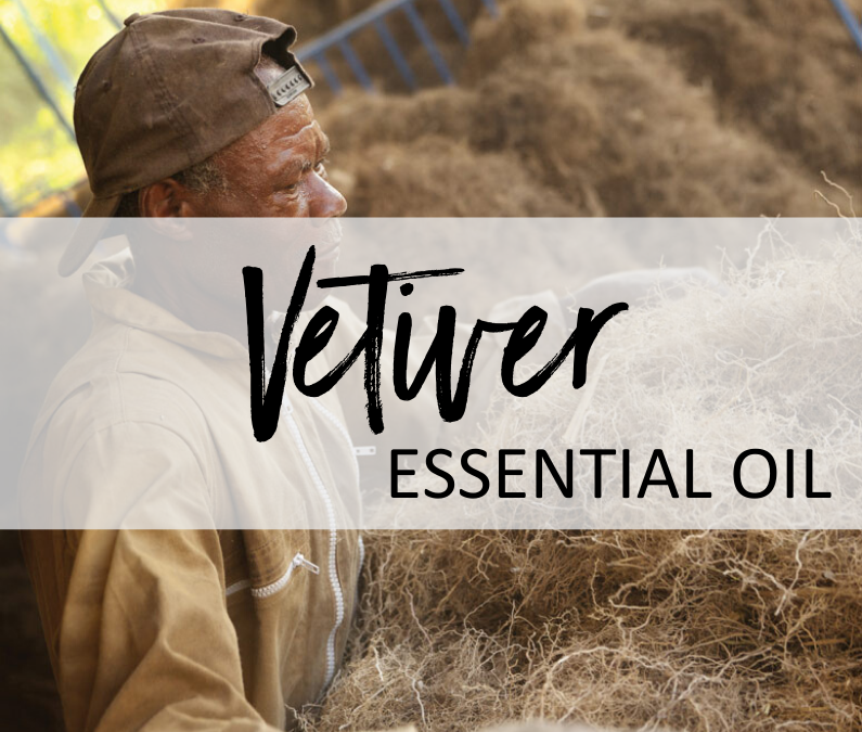 Vetiver Essential Oil – Uses & Benefits